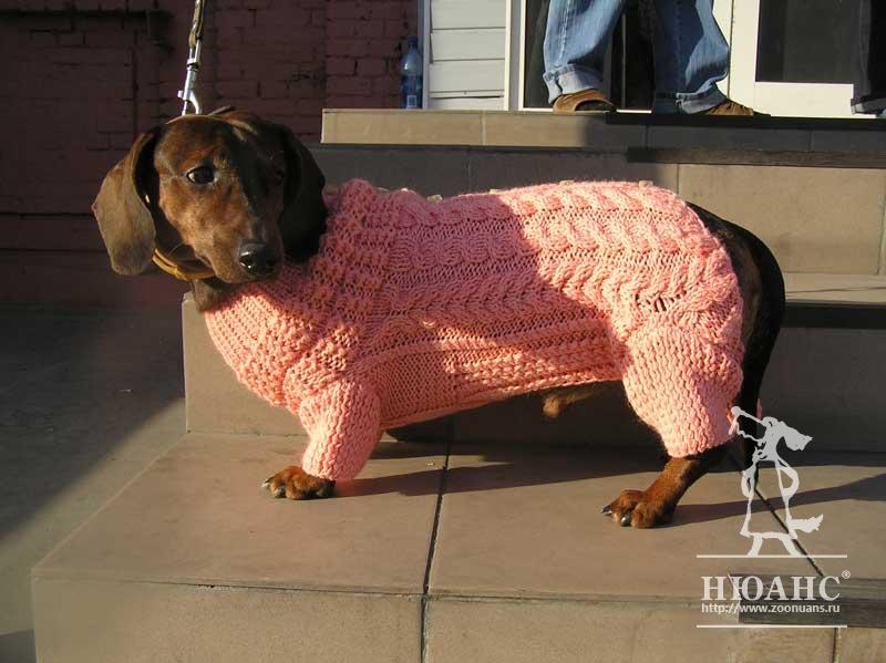 картотека одежды для собак